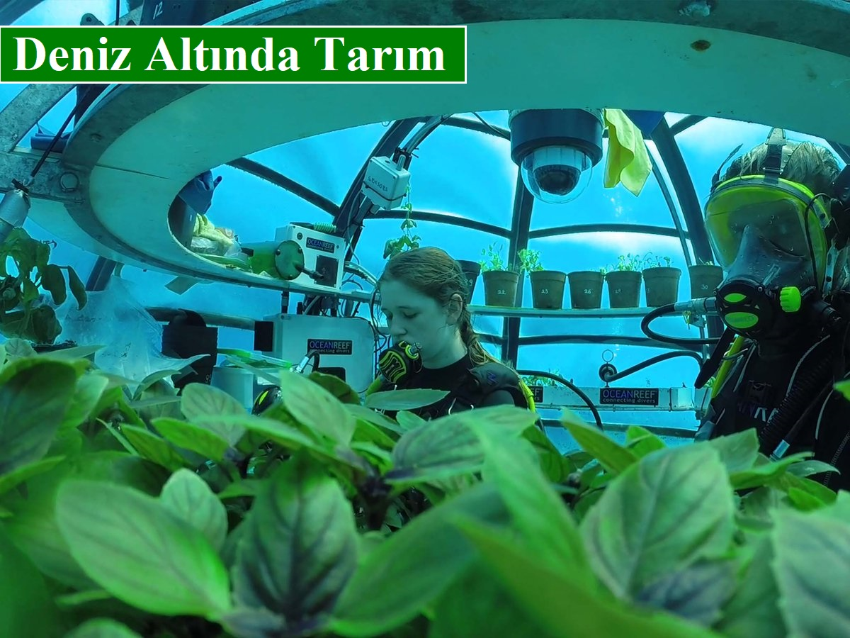 Deniz Altında Tarım ile Bitkiler Normalden İki Kat Daha Hızlı Yetişiyor