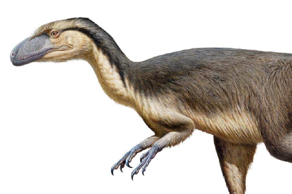 Güney Kutbu'nda İlk Defa Fosil Dinozor Tüyleri Bulundu