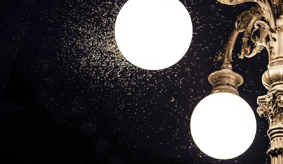 Medeniyet Gibisi Var mı?.. Almanya, Böcekler Ölmesin Diye Geceleri Sokak Işıklarını Kapatacak